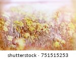 yellow flower in meadow  ... | Shutterstock . vector #751515253