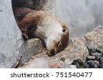 cute little otter during its...   Shutterstock . vector #751540477