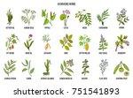 ayurvedic herbs  natural... | Shutterstock .eps vector #751541893