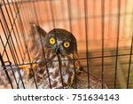 asia owl in steel net. | Shutterstock . vector #751634143