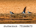 birds fly for food in the river ... | Shutterstock . vector #751668673
