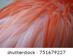 flamingo feathers | Shutterstock . vector #751679227