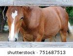 portrait of chestnut horse...   Shutterstock . vector #751687513