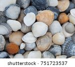 Seashells Of Different Colors....