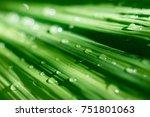 phoenix leaves with waterdrops... | Shutterstock . vector #751801063