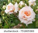 summer season. country latvia ...   Shutterstock . vector #751805383