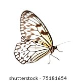 idea leuconoe butterfly...   Shutterstock . vector #75181654