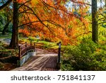 autumn landscape. autumn tree... | Shutterstock . vector #751841137