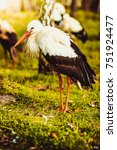 stork | Shutterstock . vector #751924477