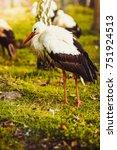 stork | Shutterstock . vector #751924513