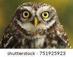 close up of little owl eyes  ...   Shutterstock . vector #751925923
