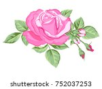 beautiful bouquet of pink roses ... | Shutterstock .eps vector #752037253