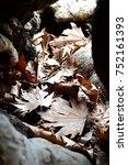 Small photo of autumn... aegean coast turkey...