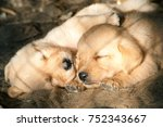 cute little puppies  two lovely ... | Shutterstock . vector #752343667