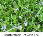 background of meadow juicy... | Shutterstock . vector #752345473
