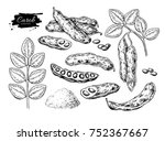 carob superfood drawing set.... | Shutterstock . vector #752367667
