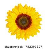 sunflower  helianthus annuus ... | Shutterstock . vector #752393827