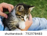 Stock photo kitten pet in hands 752578483