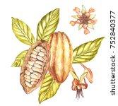 set of botanical illustration.... | Shutterstock . vector #752840377