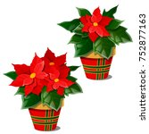 the flowering poinsettia plants ... | Shutterstock .eps vector #752877163