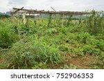 organic food and crops