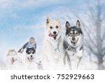 winter sled dog race in the...   Shutterstock . vector #752929663