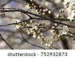 fruits blossom  april | Shutterstock . vector #752932873