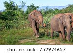 funny elephant playing in a... | Shutterstock . vector #752974657
