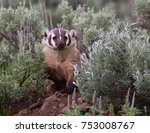 american badger working on new... | Shutterstock . vector #753008767
