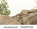 leopard coming out from its den ... | Shutterstock . vector #753039703
