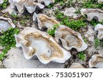 traditional natural way of... | Shutterstock . vector #753051907