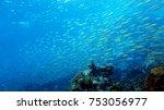 coral reef. diving. underwater... | Shutterstock . vector #753056977
