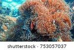 coral reef. diving. underwater... | Shutterstock . vector #753057037