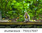 a funny little macaque with a... | Shutterstock . vector #753117037