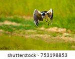 heron. black crowned night... | Shutterstock . vector #753198853