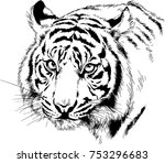 tiger drawn with ink from the... | Shutterstock .eps vector #753296683