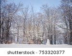 Landscape With Snowy Trees
