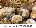 Small photo of Lodz, Poland - October 20th, 2017: Precious ammonites and fossils for sale at the annual Intersotne fair in city of Lodz.