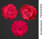realistic red roses isolated on ...