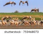 white pelicans  pelecanus... | Shutterstock . vector #753468073