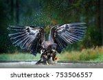 Eagle In Flight Above The Dark...