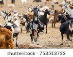 goat flock in naked mountains | Shutterstock . vector #753513733