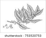 coffee branch. plant with leaf ... | Shutterstock .eps vector #753520753