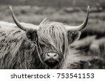 scottish highland cattle   Shutterstock . vector #753541153