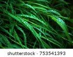 fresh green grass with dew... | Shutterstock . vector #753541393