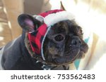 brindle french bulldog wearing... | Shutterstock . vector #753562483