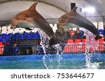 Small photo of Orenburg, Russia - November 8, 2017 year: show dolphins and beluga whales (LAT. Delphinapterus leucas) in the Dolphinarium