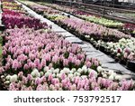field of colorful spring... | Shutterstock . vector #753792517