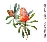 watercolour illustration of... | Shutterstock . vector #753819433