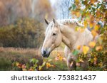 portrait of a palomino horse ...   Shutterstock . vector #753821437